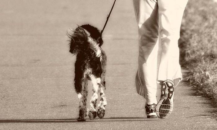 Jährlicher Leinenzwang für Hunde vom 1. April bis 15. Juli