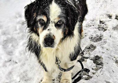 Streusalz – eine Gefahr für Hunde